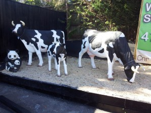 Fibreglass cow statues