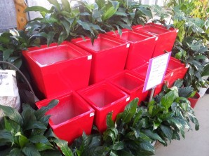 Fibreglass Planters - Tall tapered squares