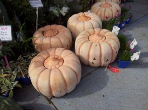VT_Pumpkin face_WEBSITE